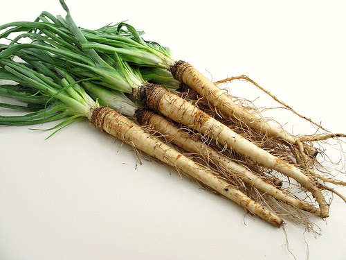 salsify roots