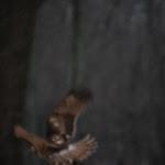 Hawk Soaring Through Winter Woods