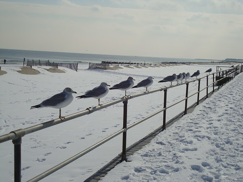 sea gull line up