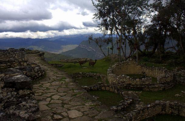 Llamas disfrutando de las ruinas de la ciudadela de Kuelap, en el Perú.