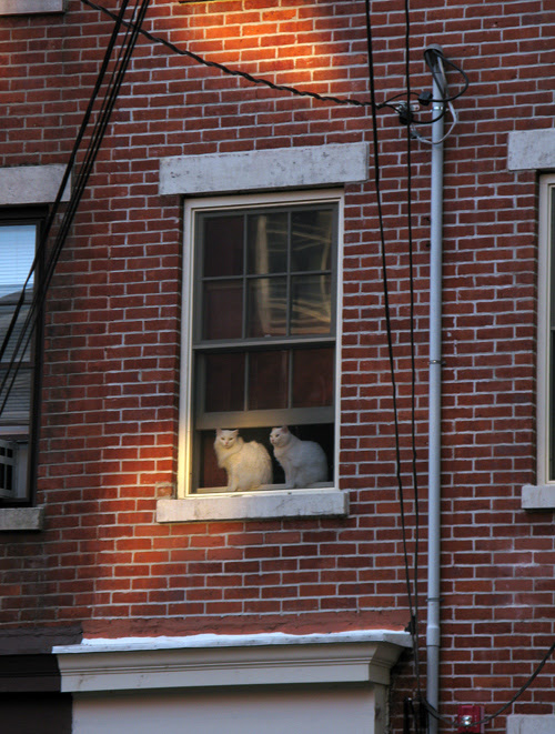 two white cats sit in a window at sunset