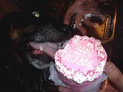 Lola_Cake_7410e