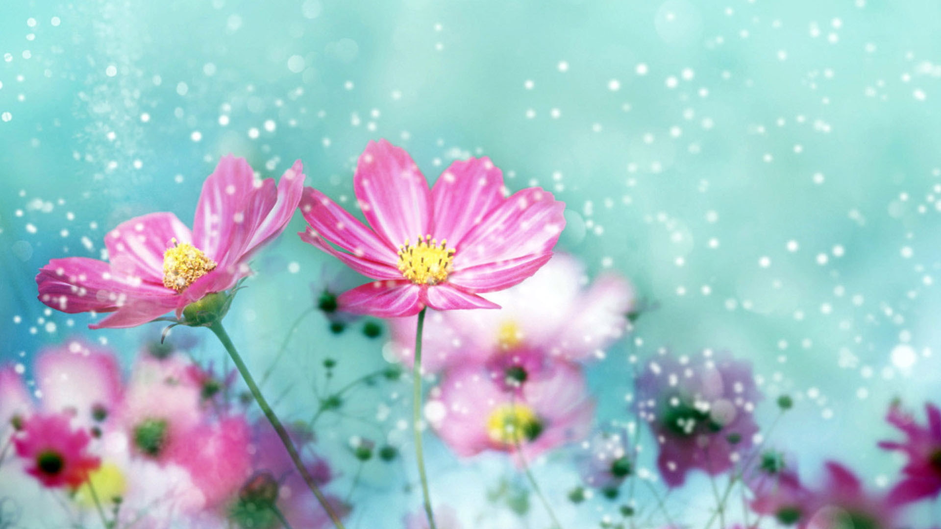 Flower Background Hd Images