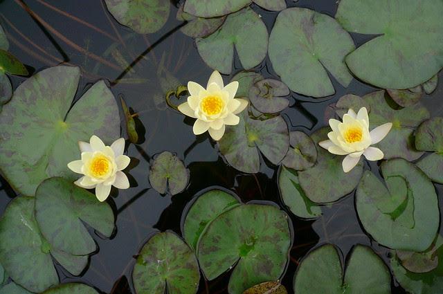 M Water Gardens