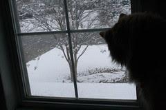 Jasper watches the snow
