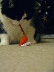 Josie went straight to the orange mouse
