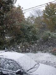 Snow_101809d