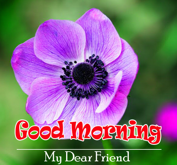 good morning Pics with flower