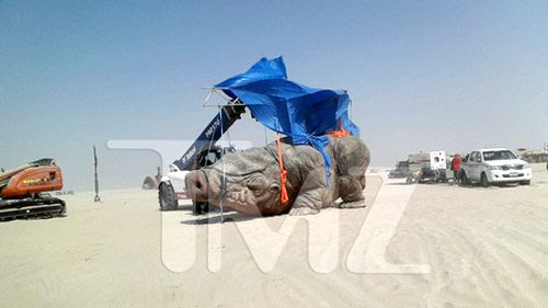 A giant pig-like creature is prepped for filming on the Tatooine set in Abu Dhabi...for STAR WARS: EPISODE VII.