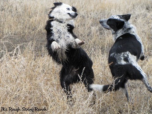 The Happy Dog Dance