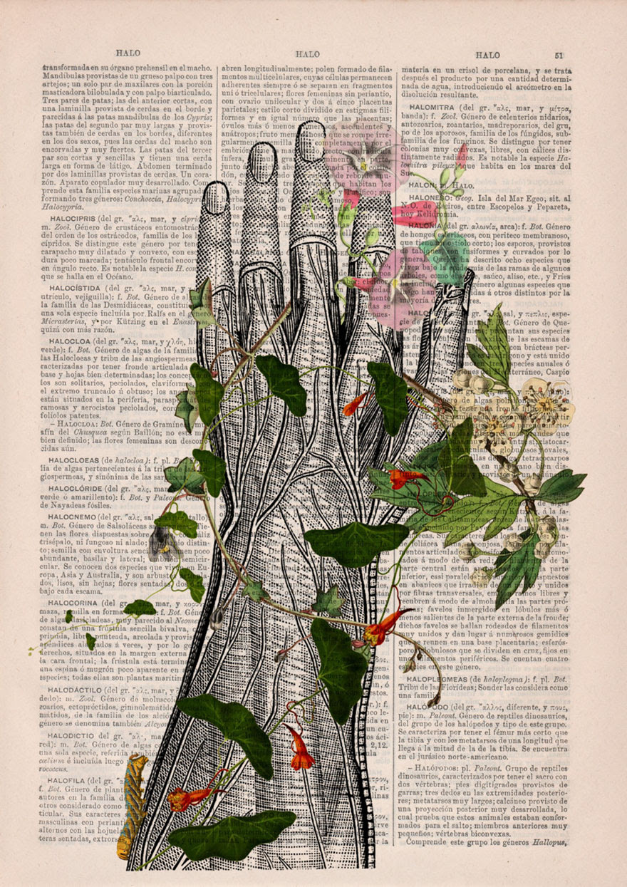 ilustraciones-anatomicas-flores-libros-viejos-prrint (10)