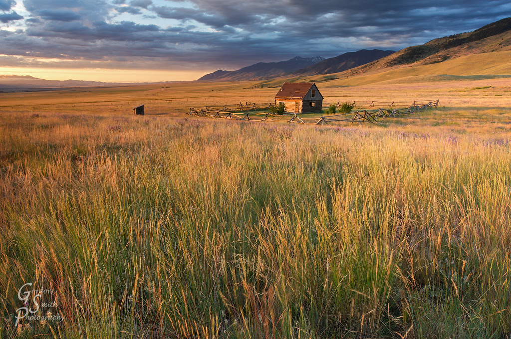 golden fields big valley montana