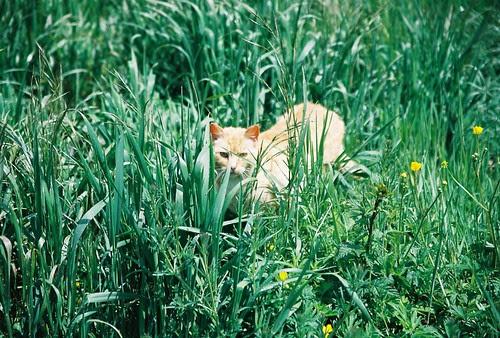 A Cat In The Grass
