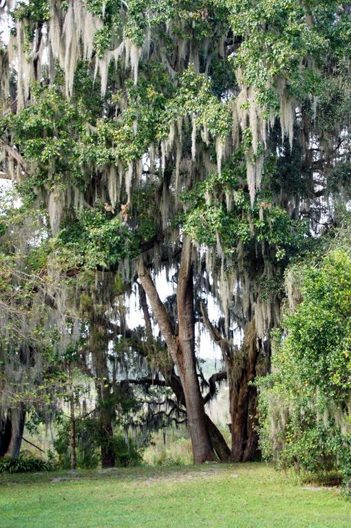 Kanapaha Botanical Gardens Gainesville Fl 32608