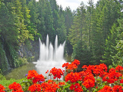 Ross Fountain and geraniums, Butchart Gardens,...