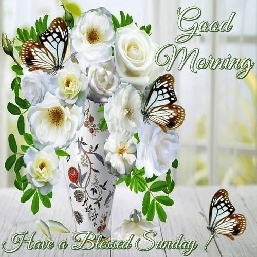 Good Morning Have A Blessed Sunday Quote Image Pictures Photos And