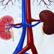 Take the Kidney Disease Quiz