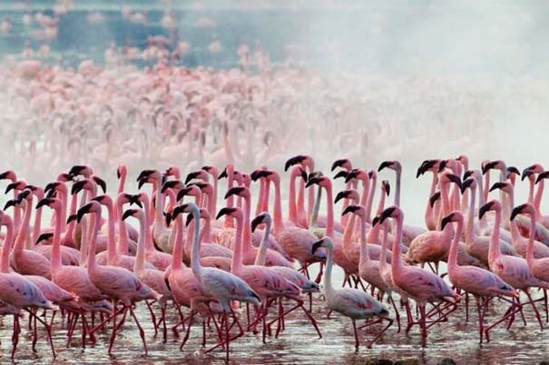 Nakuru: Η λίμνη με τα εκατομμύρια Flamingos (2)