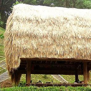tyoarch Atap Alang Alang