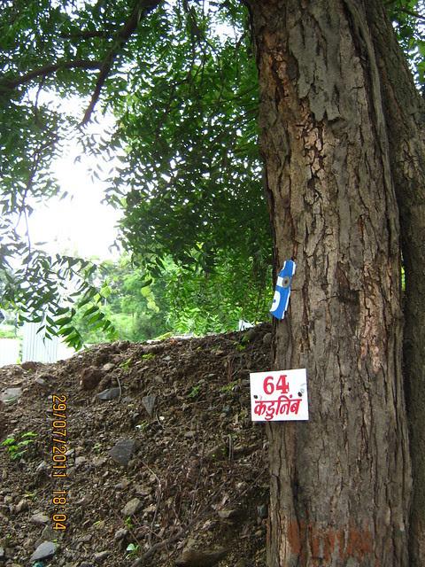 Kadulimb Tree at Paranjape Schemes' Gloria Grace, 2 BHK & 3 BHK Flats, at Bavdhan, on Paud Road, Kothrud Annexe, Pune