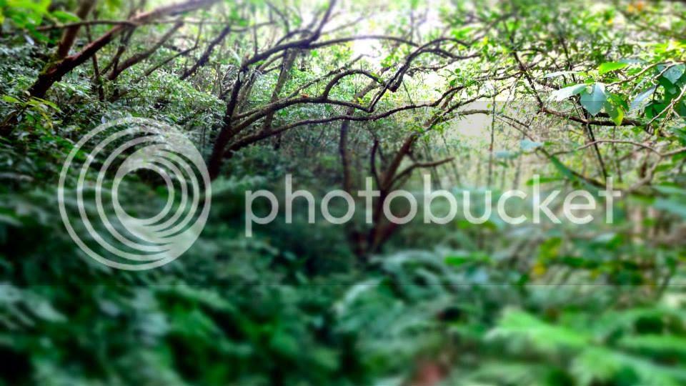 photo 1017066_10151712790626202_500493281_n.jpg