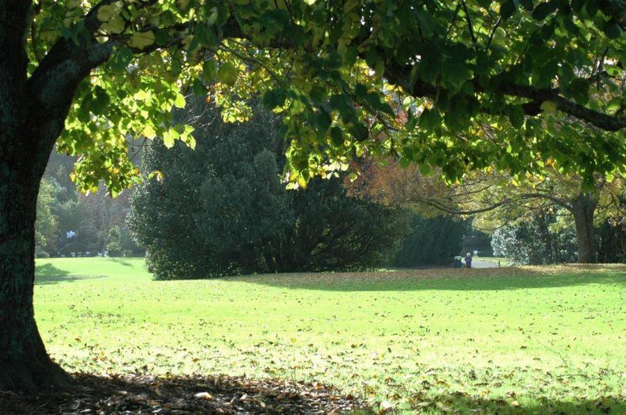 árboles Con Poca Raíz Y Mucha Sombra Plantas