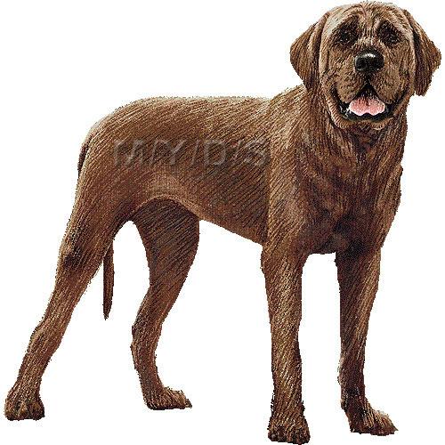 土佐犬とさいぬとさけんのイラスト条件付フリー素材集