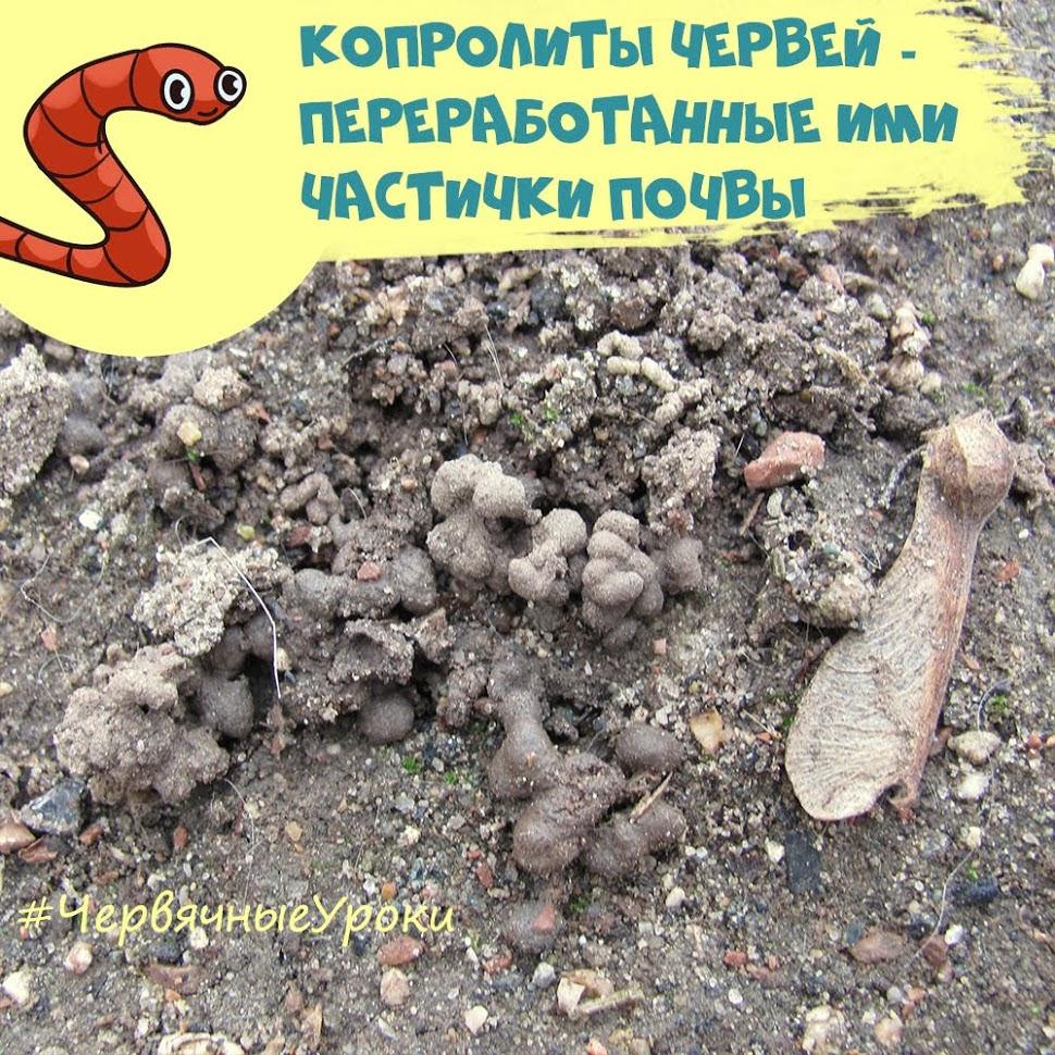 копролиты дождевых червей