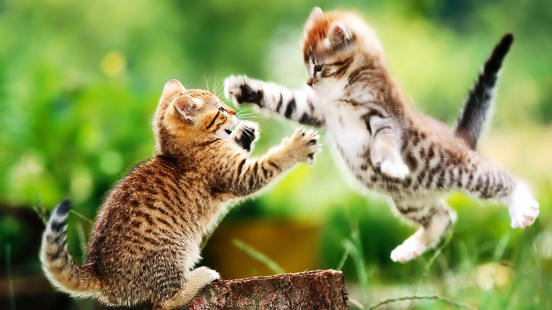 かわいい猫のデスクトップ壁紙画像まとめ【フルHD(1920x1080  - デスクトップ 壁紙 動物