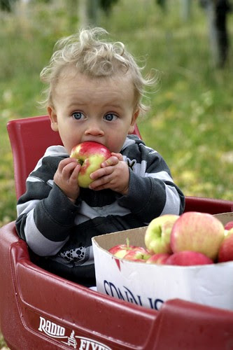 ezra-apple-eater