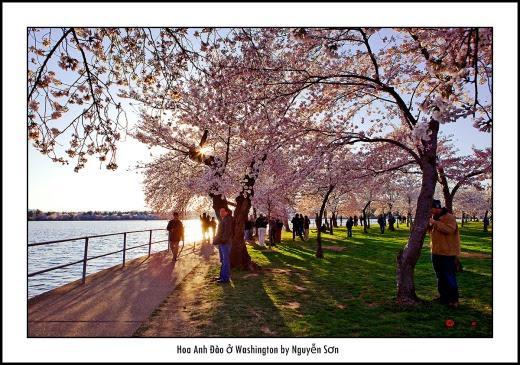 014 Mùa Xuân Washington