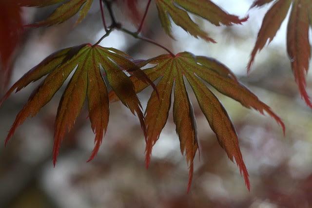 spring leaves (orange)