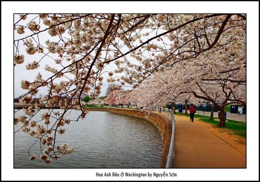 015 Mùa Xuân Washington
