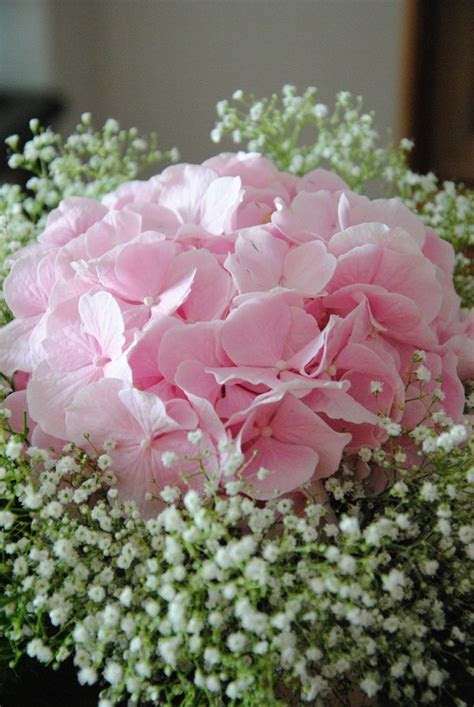 Pink hydrangea and baby's breath bouquet   Inspiration