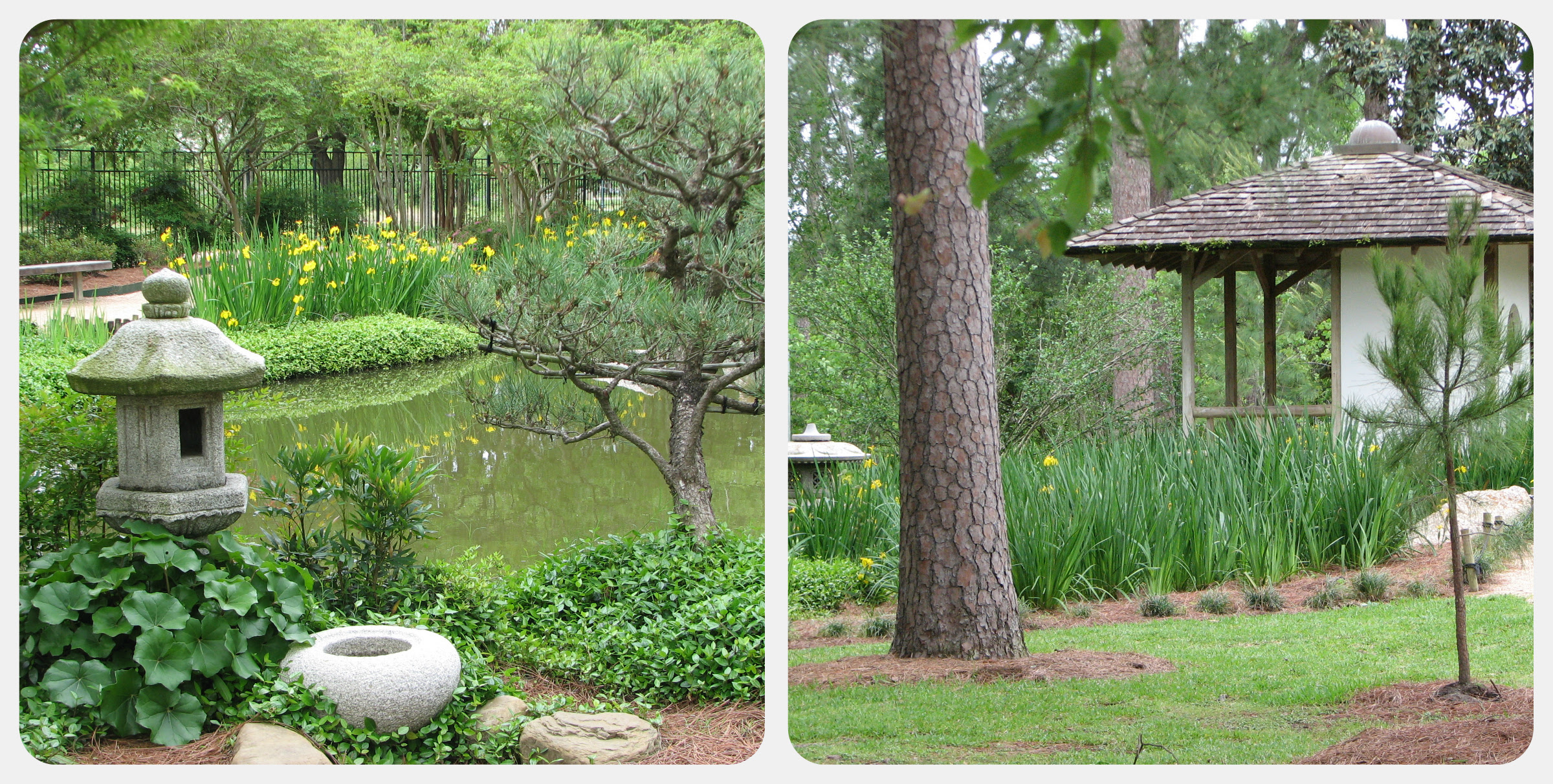 Collage Japanese Garden