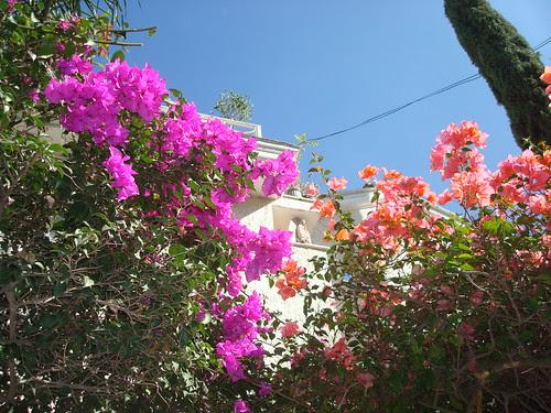 plantas tarde octubre  by frankcisco2007