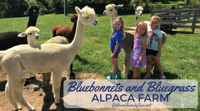 photo Bluebonnets and Bluegrass Alpaca Farm_zpso3kjmojs.png