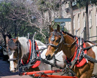 End Abuse of Roman Carriage Horses!