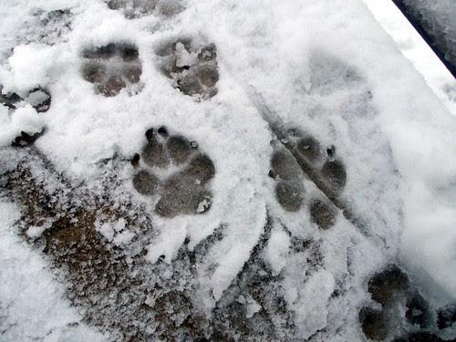 SnowPaws_22410