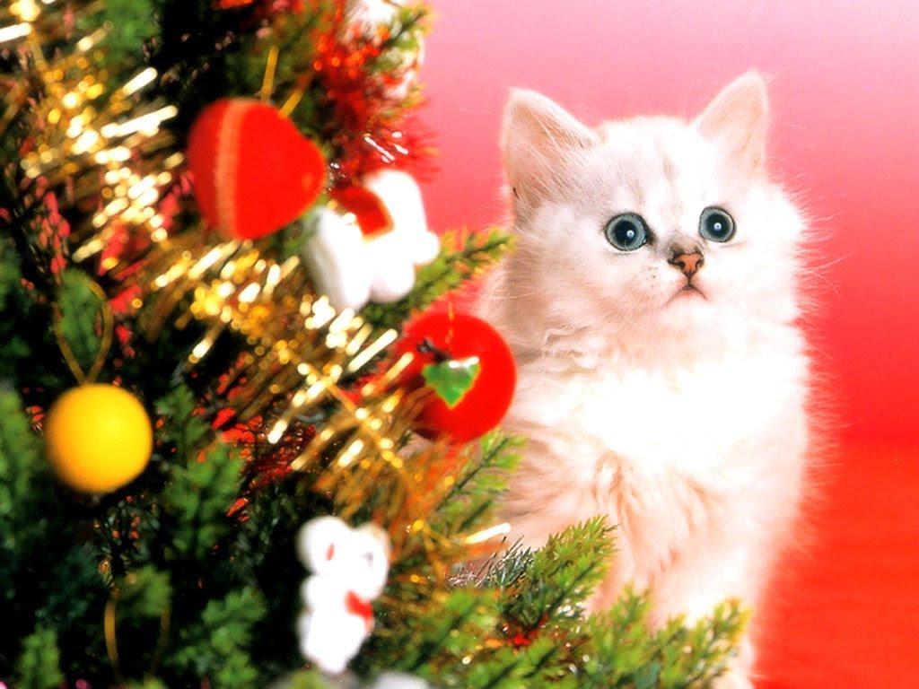 Cute Christmas Cat Wallpaper