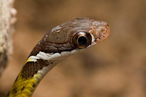 MPE65 snake shot (IMG_4318 copy)
