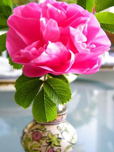 Frontenac Rose
