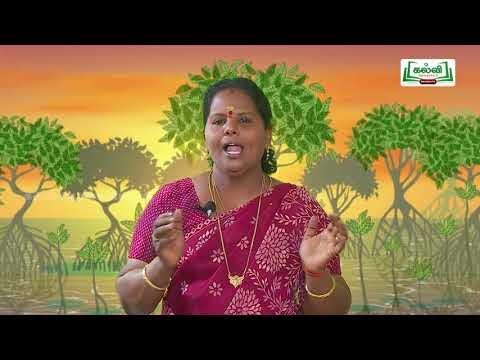 7th Tamil Bridge Course மொழியை ஆள்வோம்,மொழியோடு விளையாடு நாள் 7,8  Kalvi TV