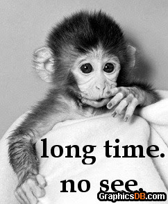 Facebook Long Time No See Monkey Pictures Long Time No See Monkey