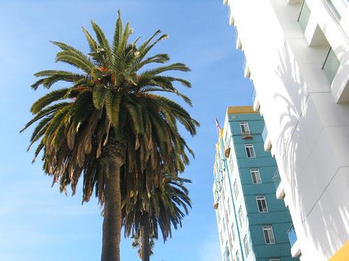 Ocean Boulevard