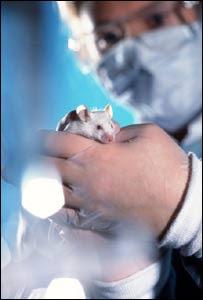 Técnico de laboratorio sosteniendo un ratón