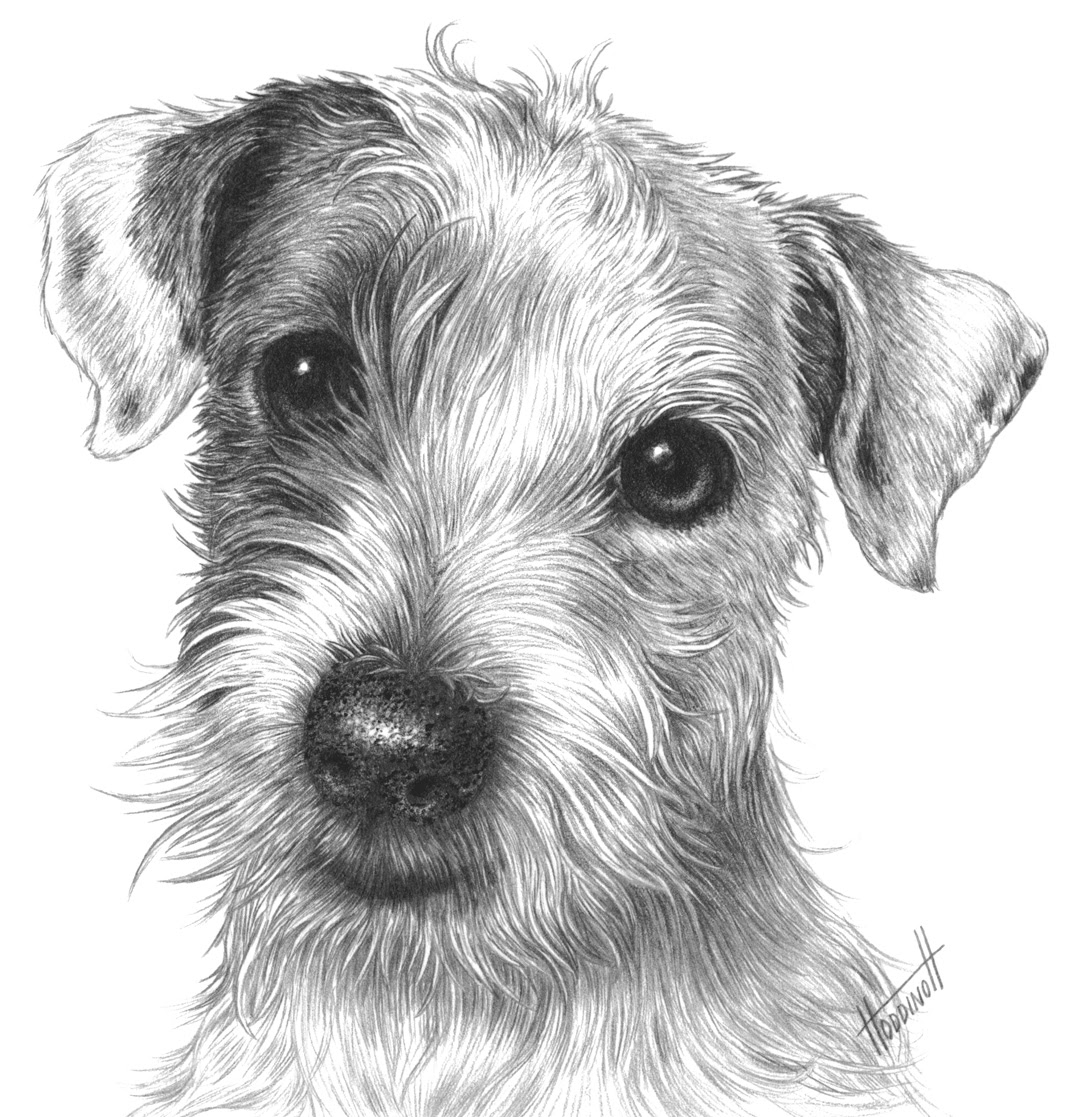 63a2 Isaac The Jack Russell Drawspace