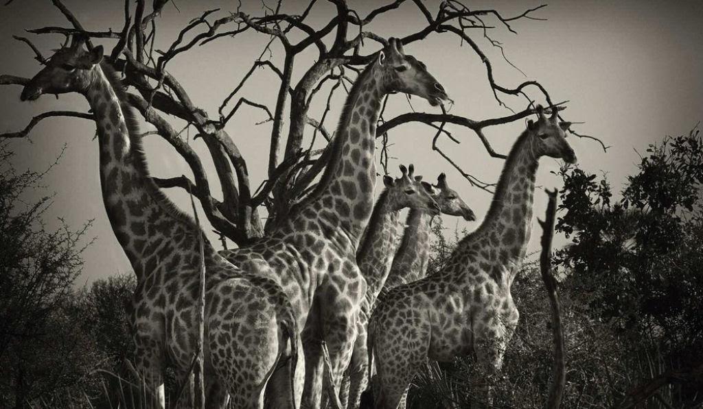 O lado colorido da África selvagem por Alex Bernasconi 06