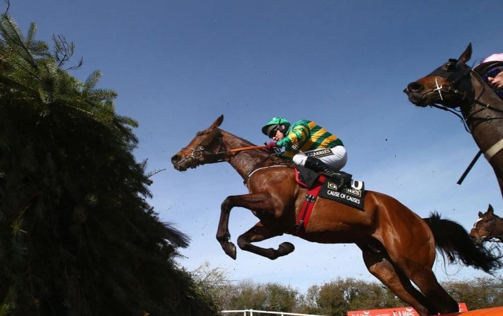 Irwan go horse betting fezzik sports betting