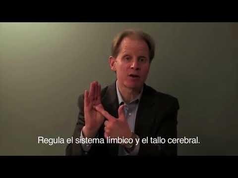 ¿Conoces el  Modelo de la mano del Dr Daniel Siegel?